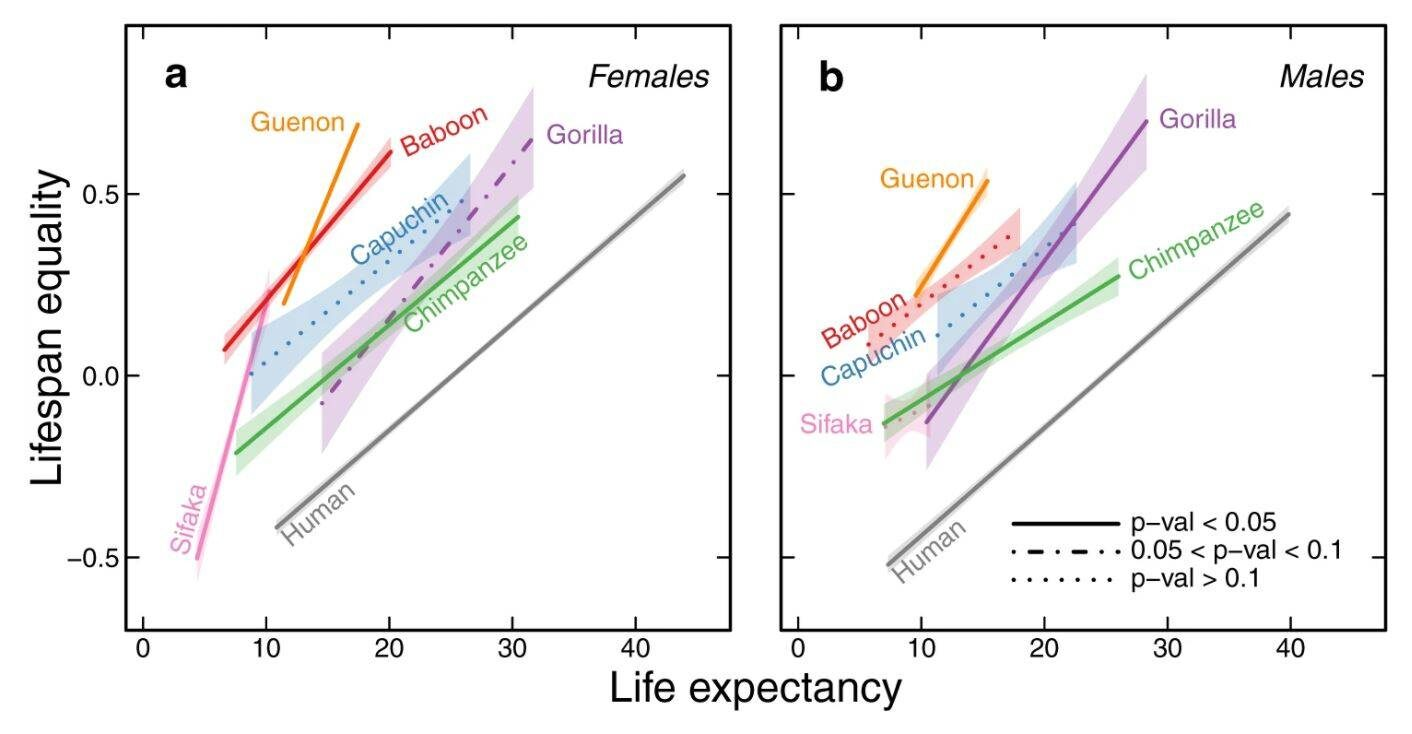 a Life expectancy and lifespan equality regression lines for females; each species is represented by a different colour. b Life expectancy and lifespan equality regression lines for males. Each genus is characterised by a relatively constrained relationship between life expectancy and lifespan equality, and thus a distinct regression line; colours as in a. The central lines are the predicted fitted values of the regression and the type of line (e.g. continuous, dashed, or dotted) depicts three levels for the p values of the slopes (how significantly different from 0 they are, two-sided t test, H0: β1 = 0, Supplementary Table 1), while the shaded polygons show the 95% confidence intervals of the regressions.